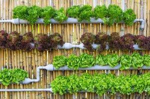 Где на даче может понадобится водоснабжение из пластиковых труб?